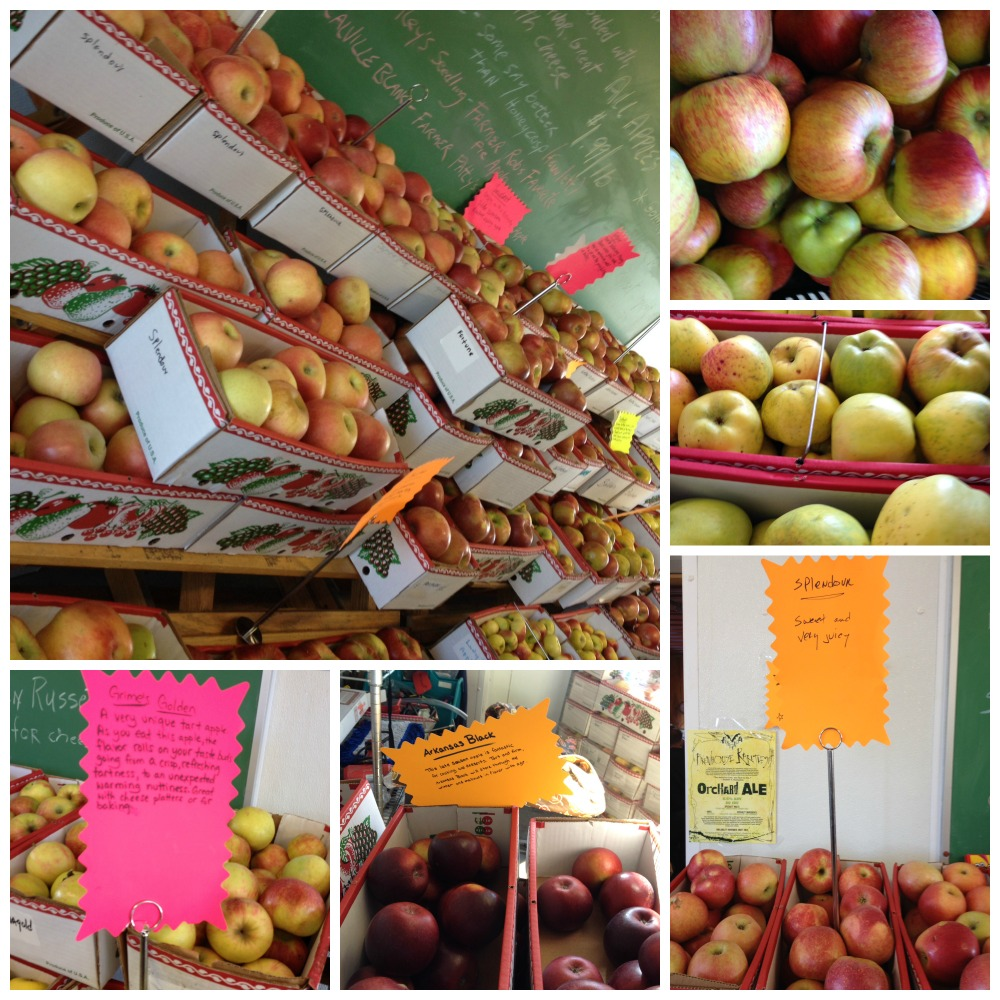 Ciderworks Apple Collage